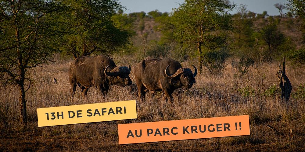 13h de safari au parc kruger en self drive