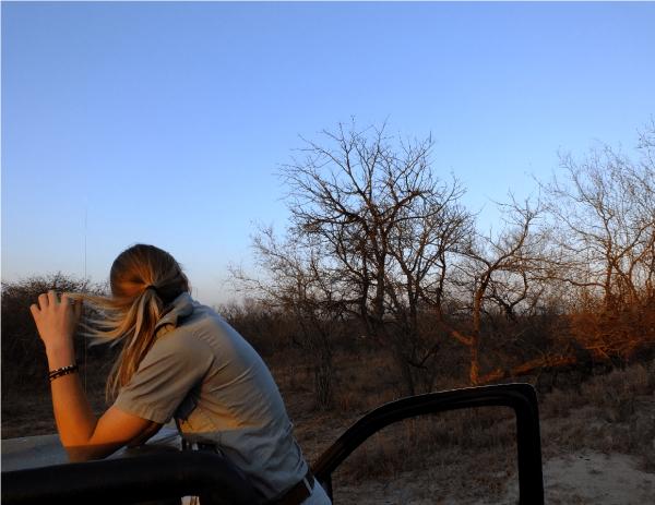 L'éco-volontariat en Afrique du Sud
