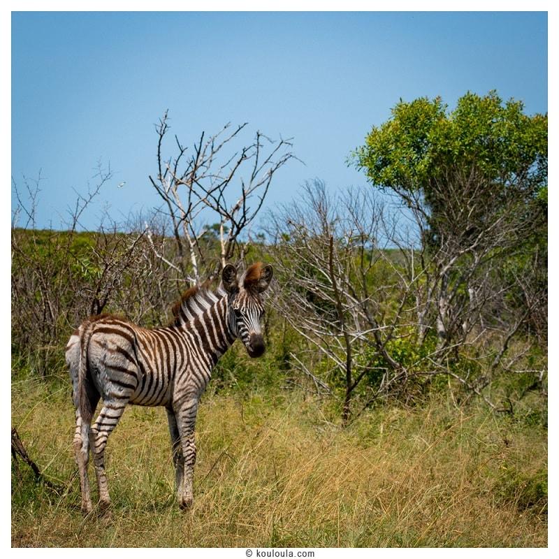 L'Afrique du sud, quatre régions à visiter