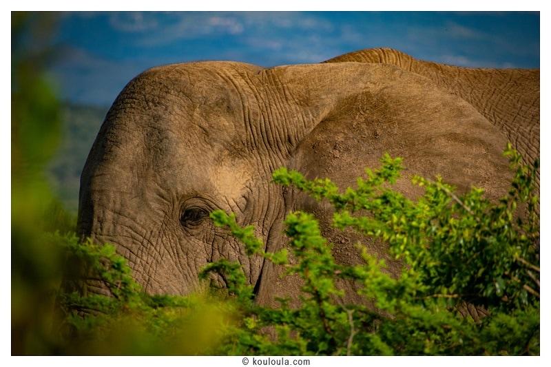 Addo Elpephant park: le safari à Port Elizabeth