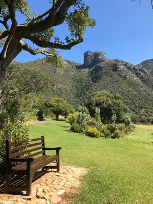 Vue sur les montagnes de Cape Town en étant au Jardin Botanique de Kirstenbosch