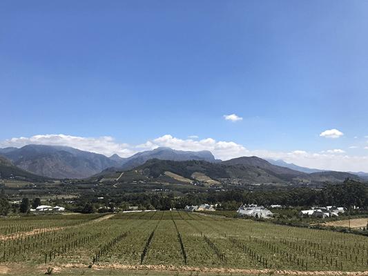 Super vue sur les vigne de Cape Town