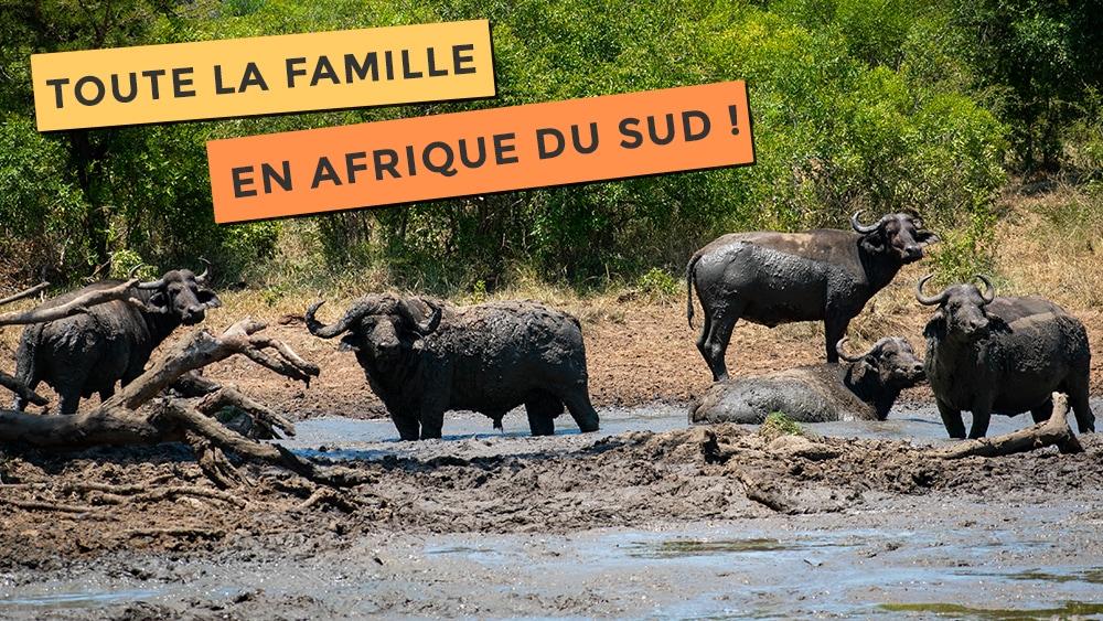 Troupeau de buffle dans une réserve en Afrique du Sud
