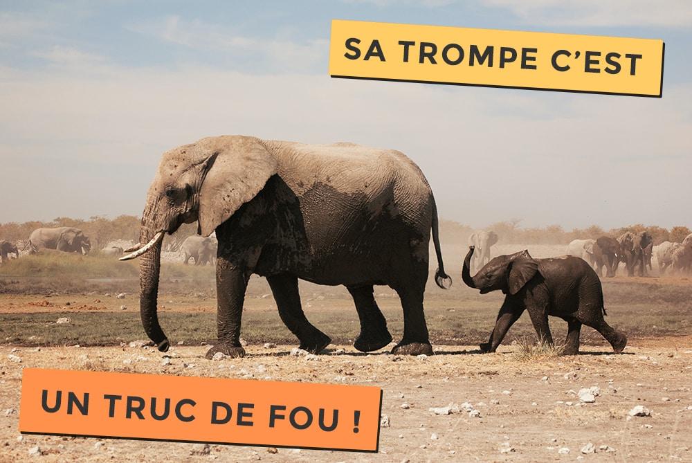 La trompe de l'éléphant, c'est un truc de Fou !