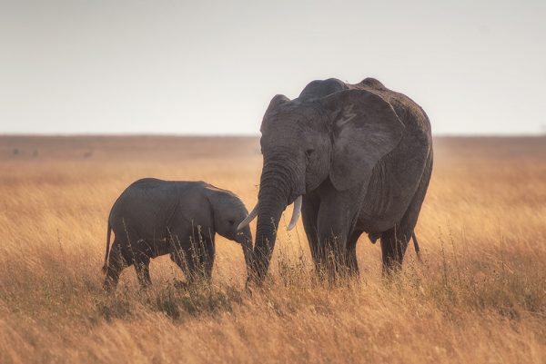 phot des éléphants des animaux sensibles