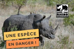 Photo de save the rhino une espèce en danger