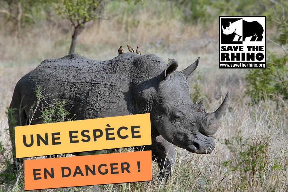 Photo de save the rhino une espèce en danger
