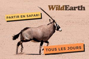 Kouloula et Wildearth, partez en safari tous les jours