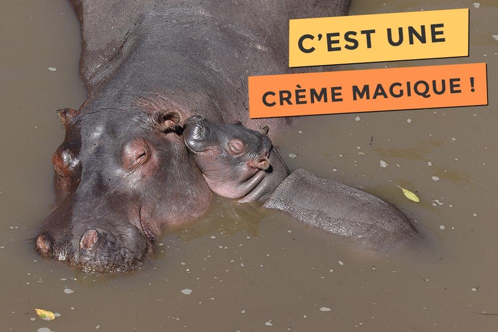 La crème magique des hippopotames