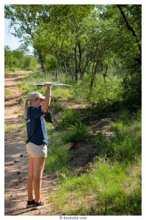 Photo à Karongwe, quand on cherche des guépards avec la radio