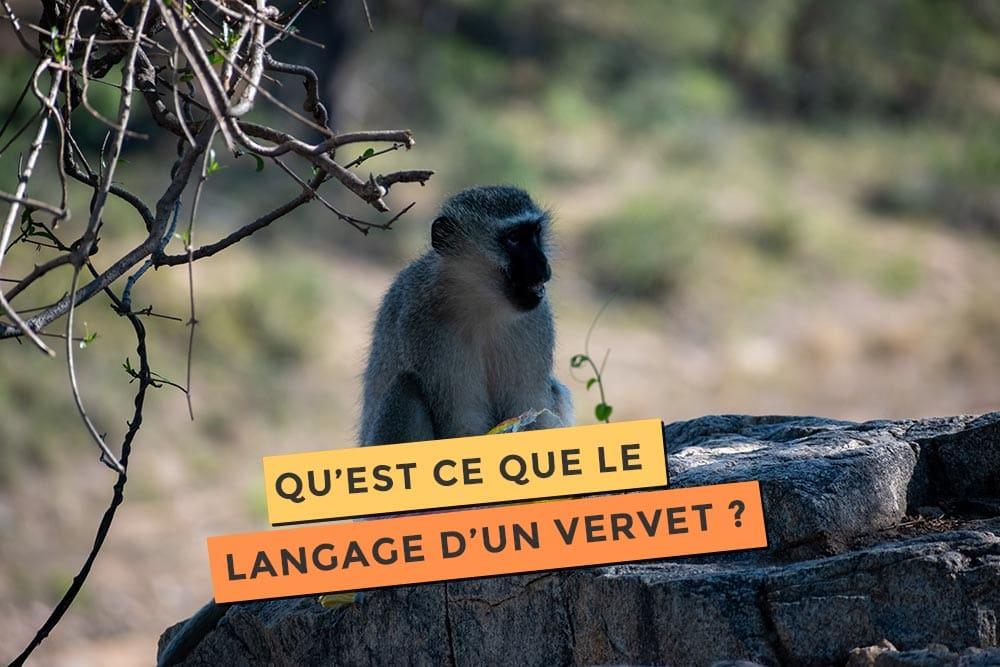 Article sur le langage des vervets